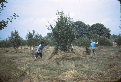 020 1613 mulching young trees 7-12-43.jpg