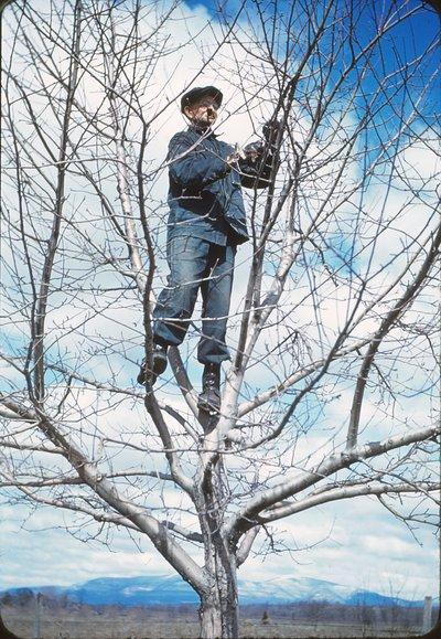 021 xxx pruning 4-23-40.jpg